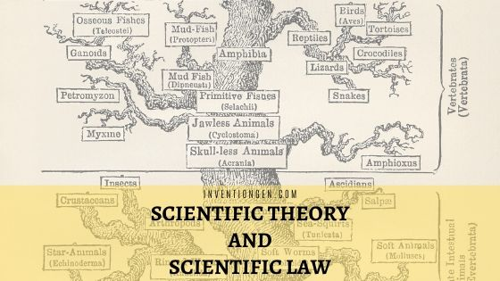scientific theory and scientific law